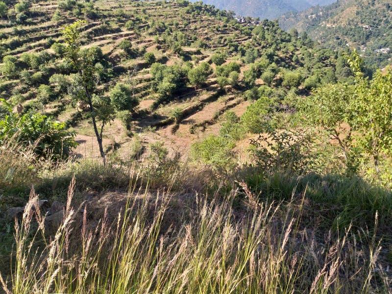 Una bella vista dei campi verdi del terrazzo fotografia stock