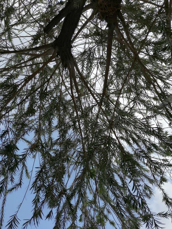 Una bella vista di un albero nei precedenti del cielo immagine stock