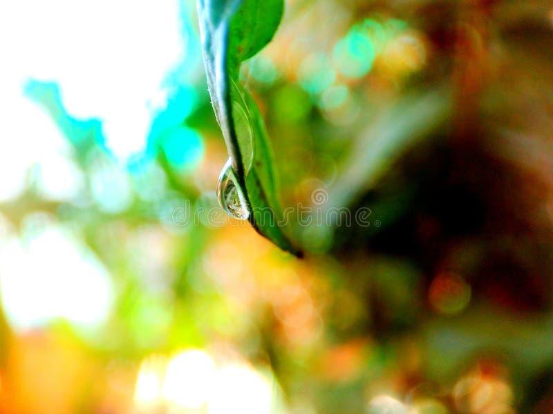 Una bellezza della natura immagine stock