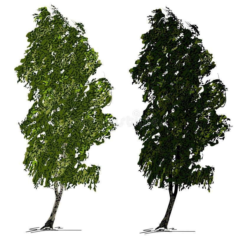 Una betulla L di due betulle con fogliame verde, su vento, su un fondo bianco illustrazione vettoriale