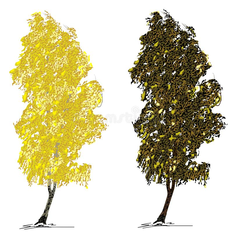 Una betulla L di due betulle con il fogliame di autunno, su vento, su un fondo bianco royalty illustrazione gratis