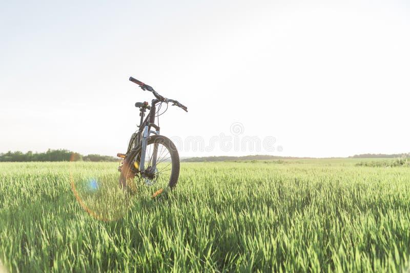 Una bicicleta que se coloca en la hierba imagen de archivo libre de regalías