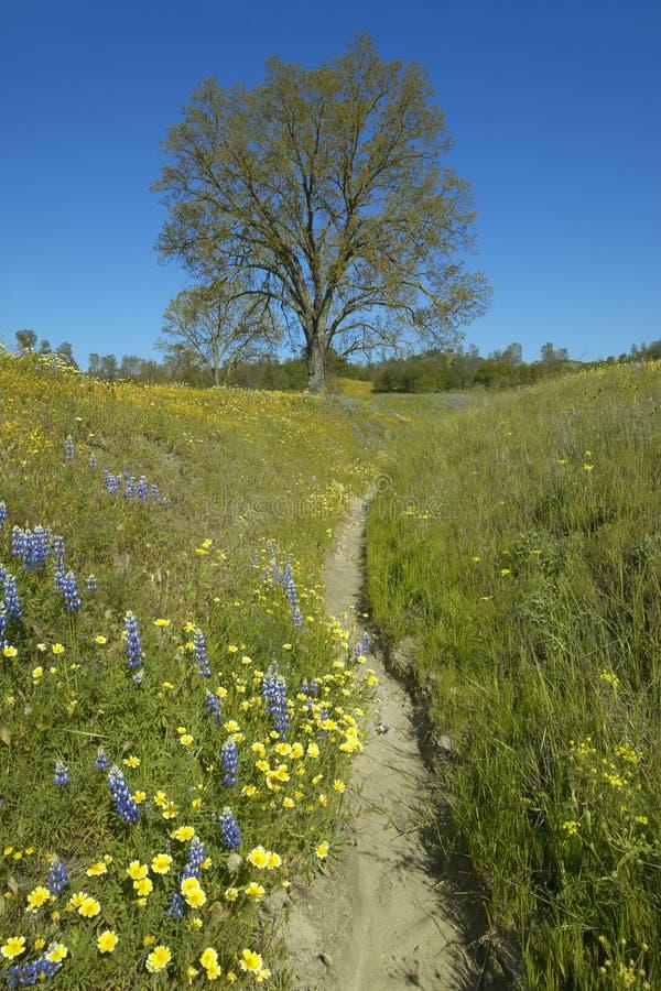 Una bobina de la trayectoria más allá de un árbol solitario y de un ramo colorido de flores de la primavera que florecen de la ru fotos de archivo