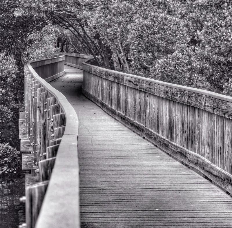 Una bobina del paseo marítimo entre los árboles fotos de archivo