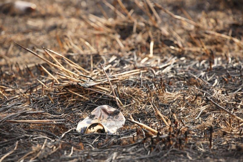 Una botella carbonizada de cristal vacía está mintiendo en la hierba que se ha cocido hacia fuera Catástrofe ecológica La primave foto de archivo