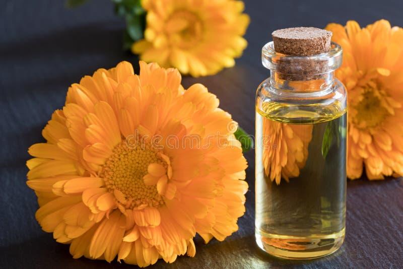 Una botella de aceite esencial del calendula en un fondo oscuro fotografía de archivo libre de regalías