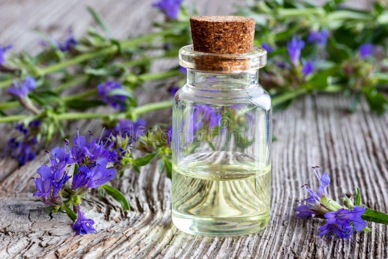 Una botella de aceite esencial del Hisopo con el Hisopo floreciente fresco fotos de archivo libres de regalías
