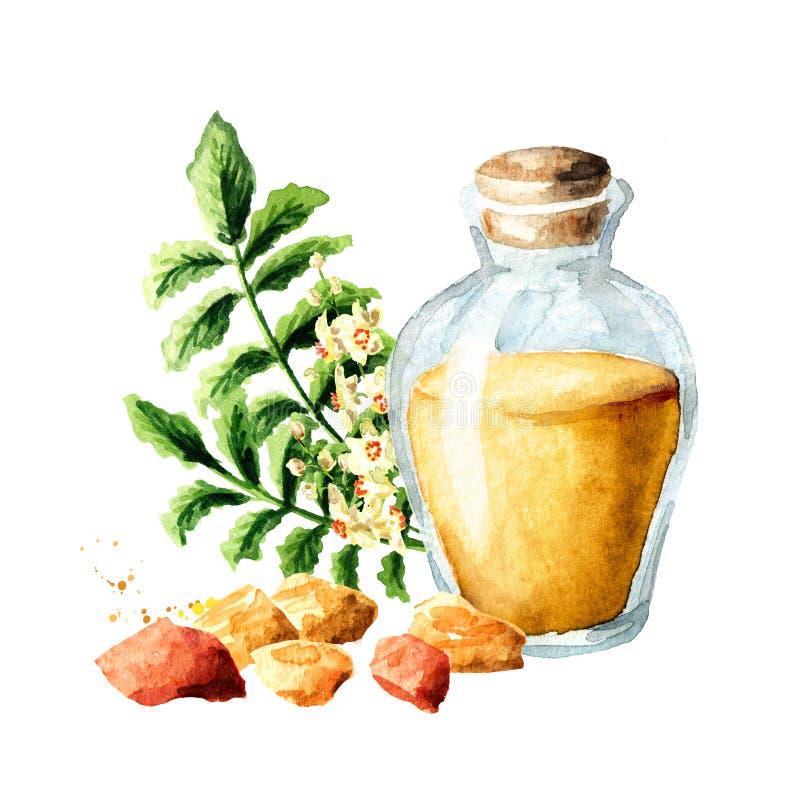 Una botella de aceite esencial del incienso con la resina del incienso y leafes y flores del boswellia libre illustration
