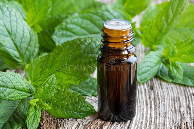 Una botella de aceite esencial de la hierbabuena con licencia fresca de la hierbabuena foto de archivo libre de regalías