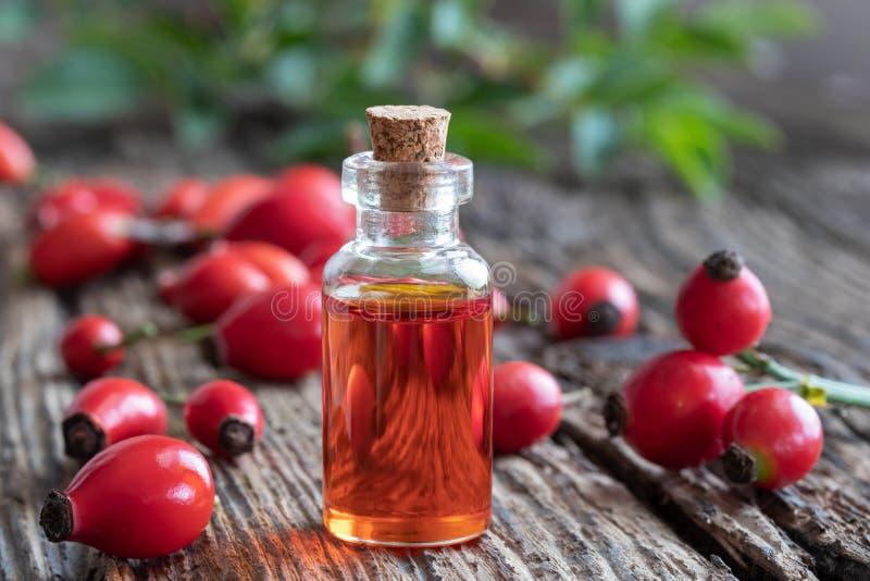 Una botella de aceite de semilla del escaramujo con los escaramujos frescos fotos de archivo