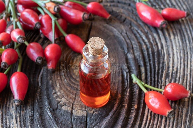 Una botella de aceite de semilla del escaramujo con los escaramujos frescos imagenes de archivo