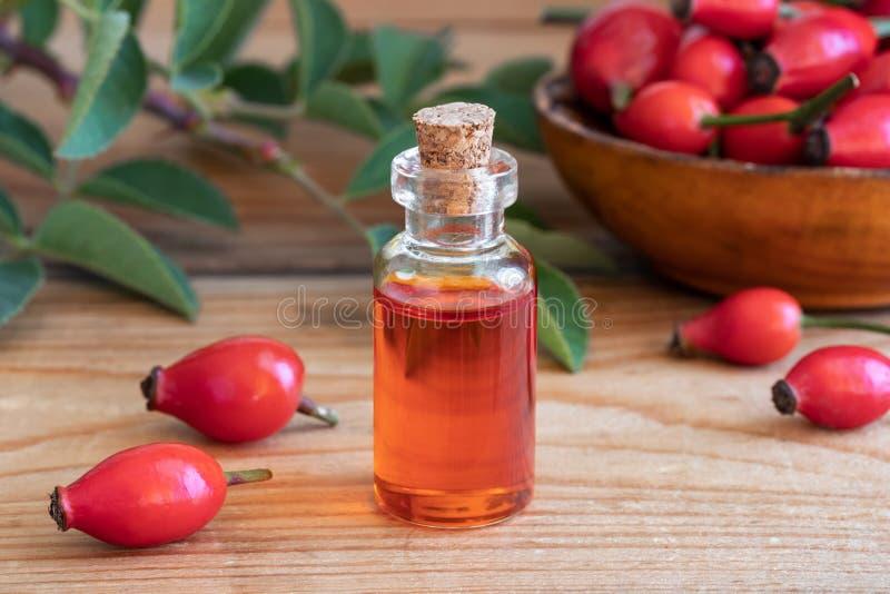 Una botella de aceite de semilla del escaramujo con los escaramujos rojos fotos de archivo