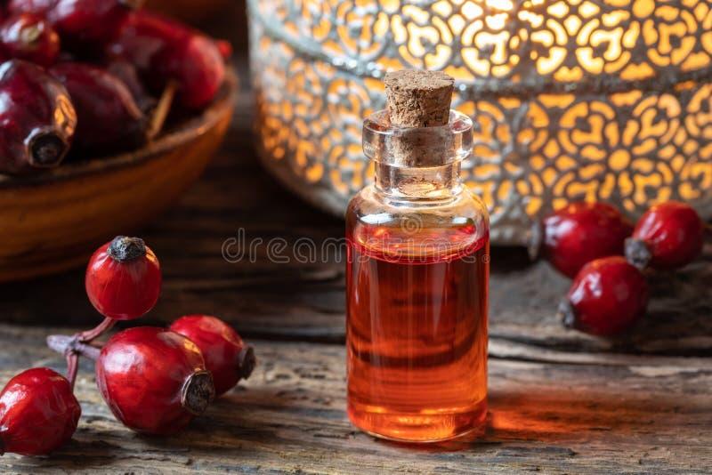 Una botella de aceite de semilla del escaramujo con los escaramujos secados fotografía de archivo