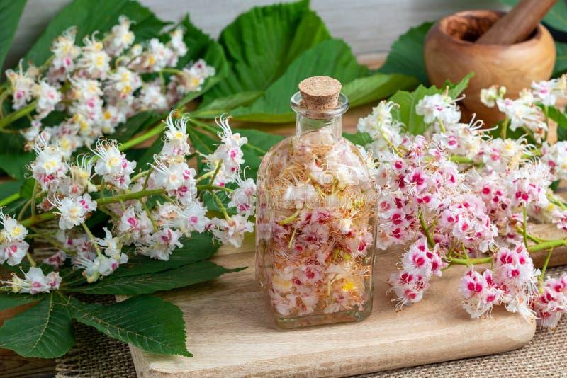 Una botella llenó de los flores y del alcohol de la castaña de caballo, a pre foto de archivo libre de regalías