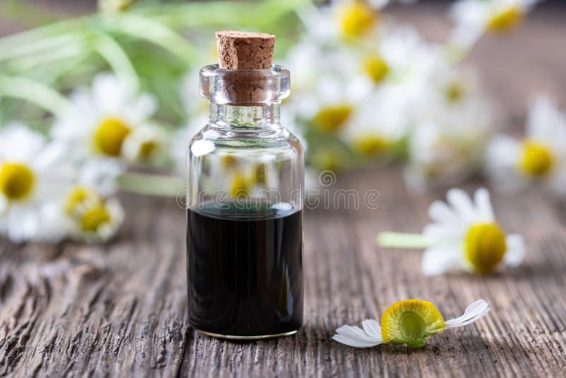 Una bottiglia del petrolio essenziale della camomilla blu scuro e dei fiori freschi fotografia stock libera da diritti