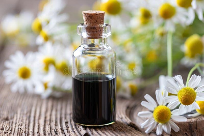 Una bottiglia del petrolio essenziale e dei fiori della camomilla blu scuro fotografie stock libere da diritti