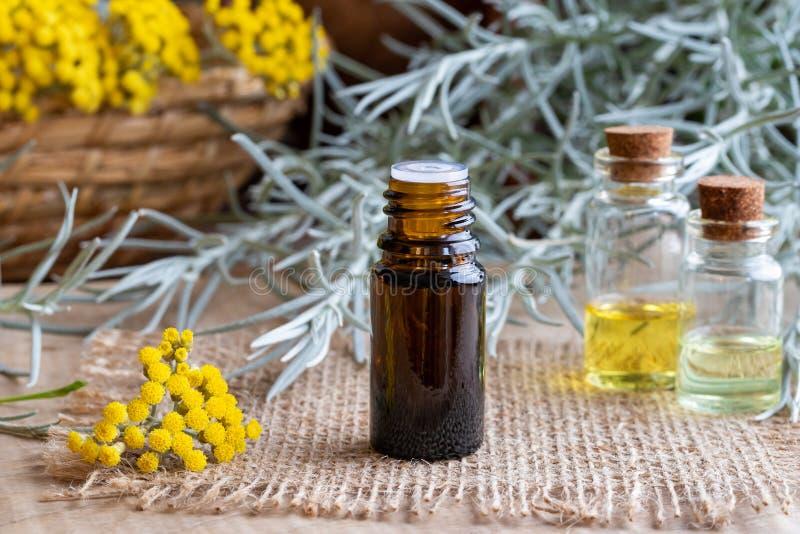 Una bottiglia dell'olio essenziale del helichrysum con helich di fioritura fresco immagini stock libere da diritti
