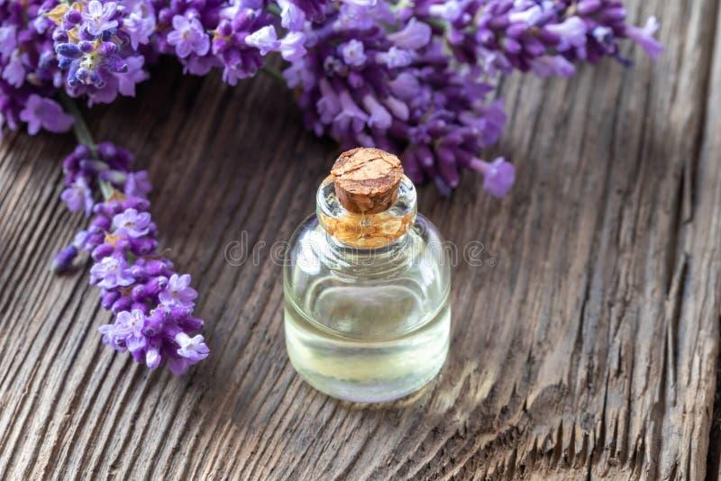 Una bottiglia dell'olio essenziale della lavanda con lavanda fresca fotografia stock