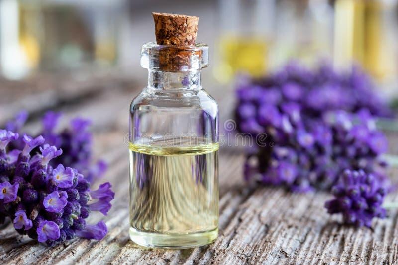 Una bottiglia dell'olio essenziale della lavanda con lavanda fresca fiorisce fotografia stock libera da diritti