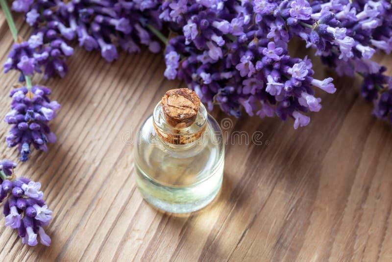 Una bottiglia dell'olio essenziale della lavanda con la pianta fresca fotografia stock