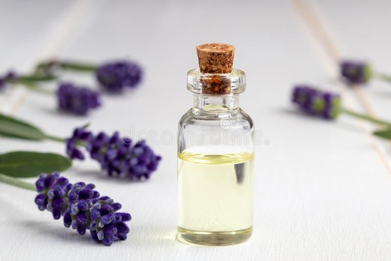 Una bottiglia di olio essenziale con lavanda di fioritura fresca immagine stock libera da diritti