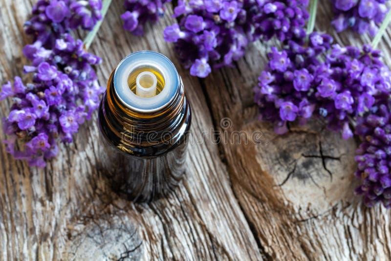 Una bottiglia di olio essenziale con lavanda di fioritura fresca fotografia stock