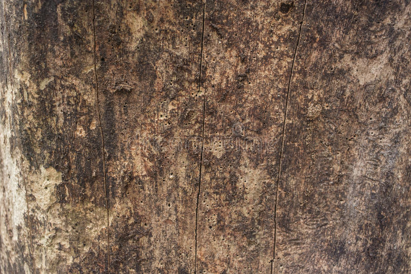 Una cáscara del fondo del árbol foto de archivo