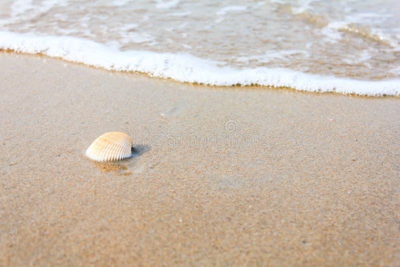 Una cáscara del mar en la playa foto de archivo libre de regalías