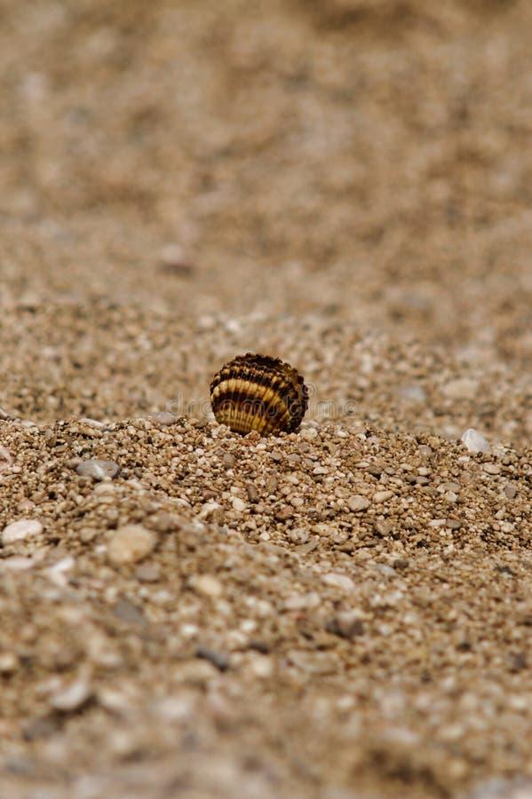 Una cáscara en la playa en Croacia, cierre para arriba foto de archivo libre de regalías