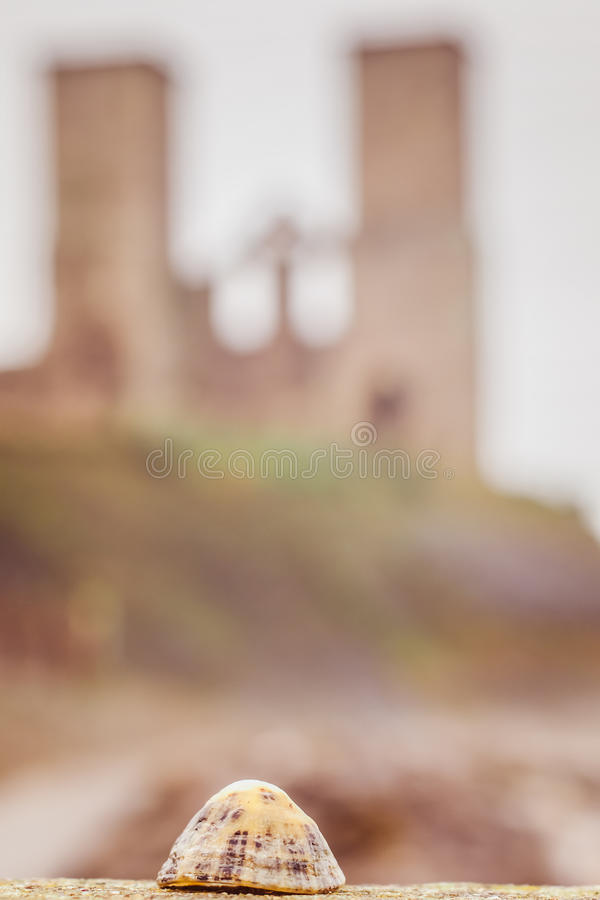 Una cáscara en Reculver foto de archivo