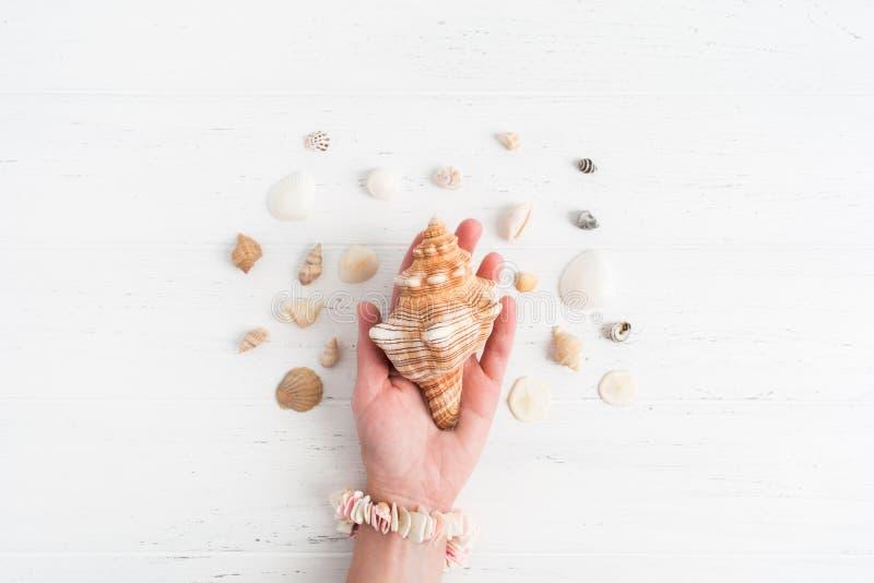 Una cáscara grande en la mano femenina con las pequeñas diversas cáscaras alrededor, imagen de archivo