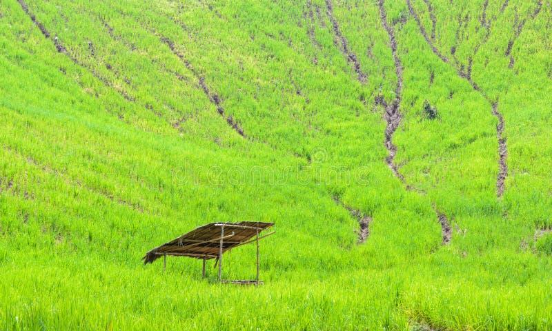 Una cabaña cubierta con paja en el campo del arroz foto de archivo libre de regalías