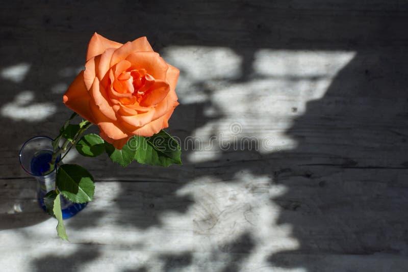 Una cabeza de la naranja hermosa subió con las hojas verdes en el vidrio en la luz del sol con las luces y las sombras fotografía de archivo