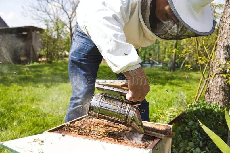 Una caja de la colmena de la abeja que es fumada para calmar las abejas obreras y permitiendo que un apicultor examine la colmena foto de archivo
