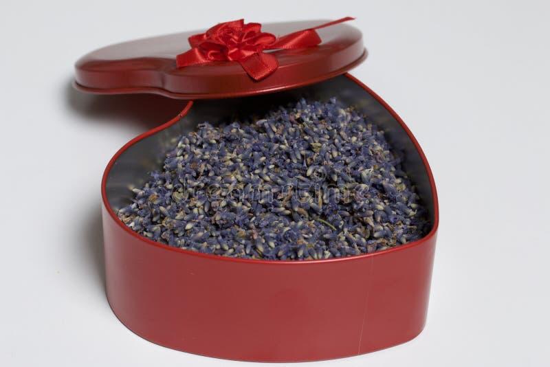 Una caja roja abierta en la forma de un corazón con lavanda secada florece Se coloca en un fondo blanco foto de archivo libre de regalías