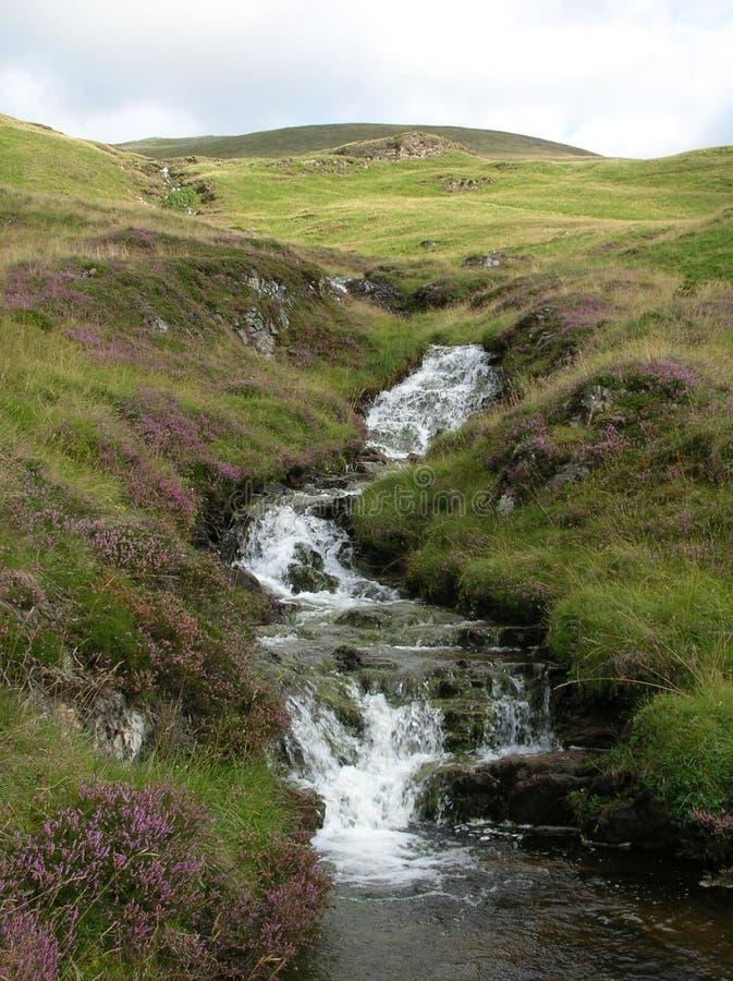 Una cala acompañada por el brezo púrpura que corre abajo de las colinas verdes en el valle de Glenshee, montañas de Grampian, Esc foto de archivo
