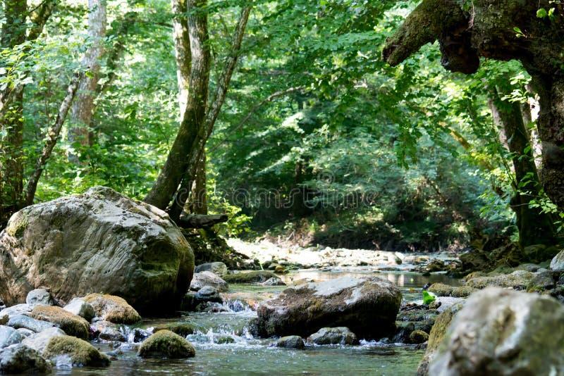 Una cala en el bosque fotos de archivo libres de regalías
