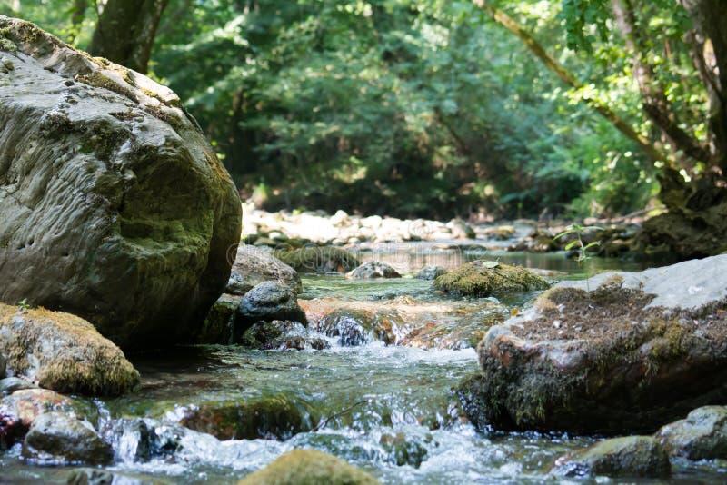 Una cala en el bosque foto de archivo libre de regalías