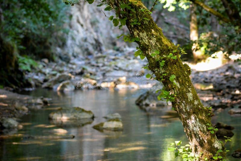 Una cala en el bosque imágenes de archivo libres de regalías