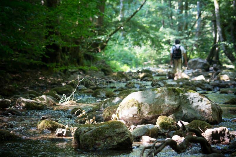 Una cala en el bosque imagen de archivo