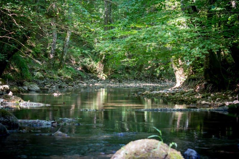 Una cala en el bosque imagenes de archivo