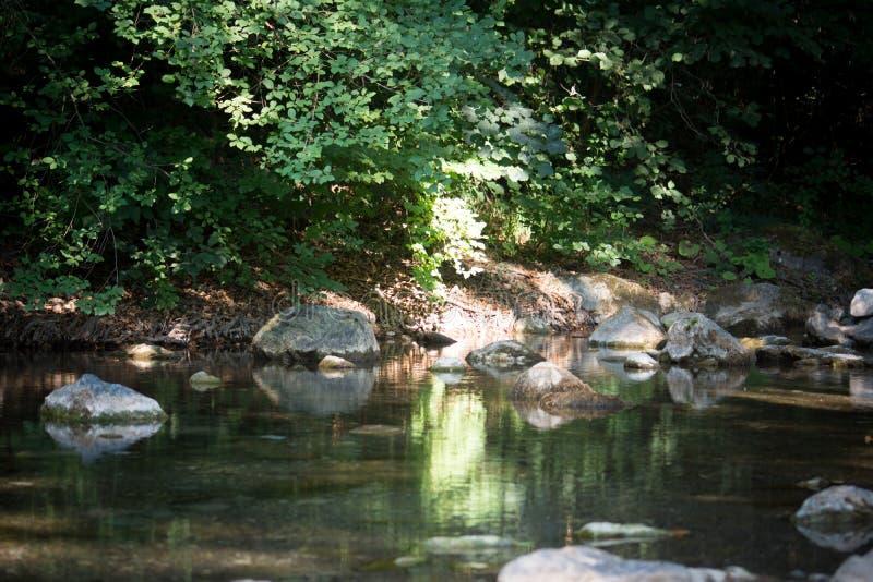Una cala en el bosque foto de archivo