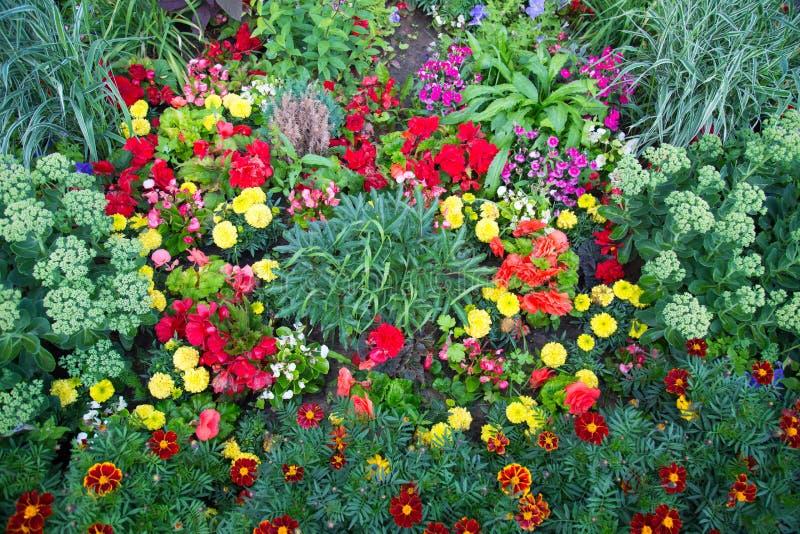 Una cama de flor de las flores brillantes de diversas plantas Agricultura foto de archivo