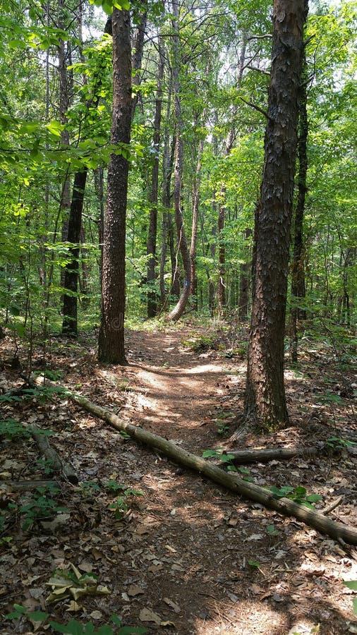 Una camminata nel legno immagini stock