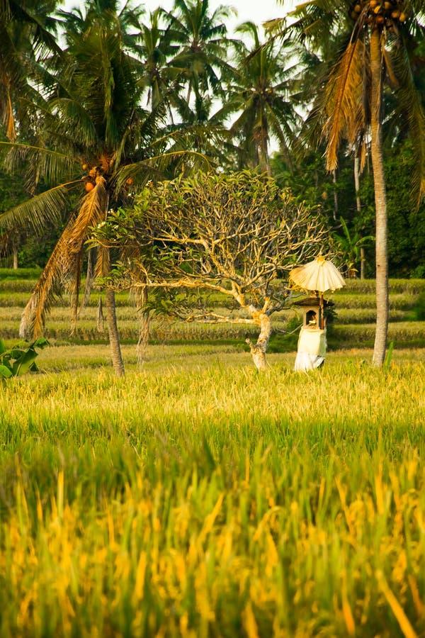 Una capilla hindú en el medio de un campo del arroz cerca de Ubud, Bali, adentro fotos de archivo