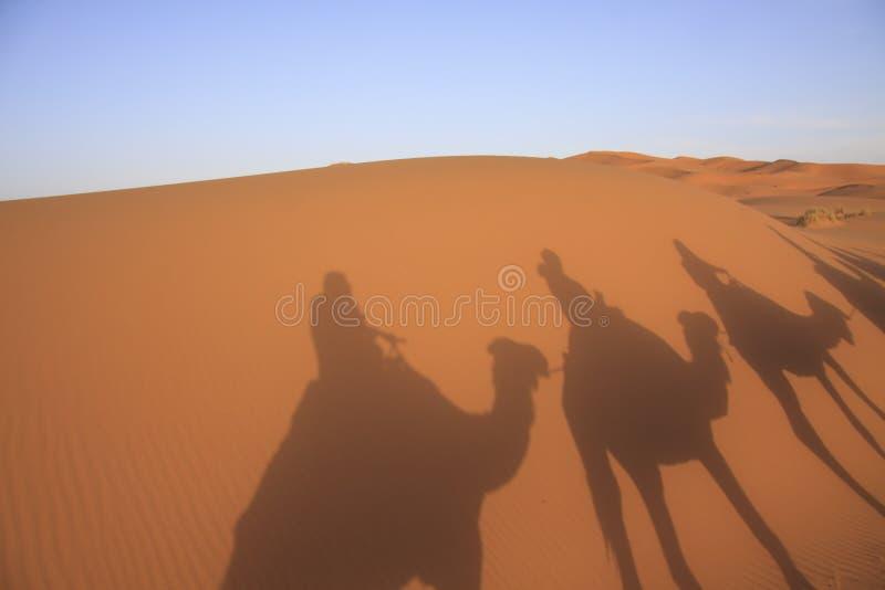 Una caravana de camellos en el desierto fotos de archivo libres de regalías