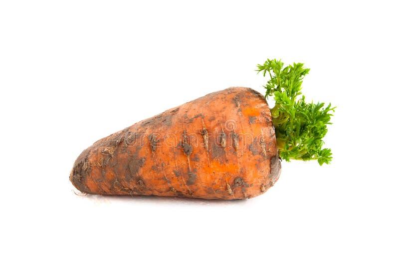 Una carota di recente scavata su un fondo bianco fotografie stock libere da diritti