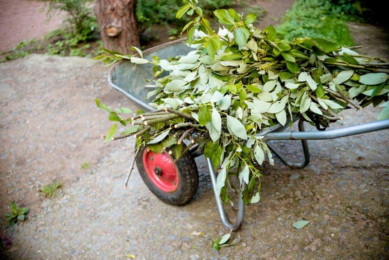 Una carretilla de acero del jardín con las flores de corte Final de la estación de verano Limpieza del otoño en el jardín Final d fotografía de archivo libre de regalías