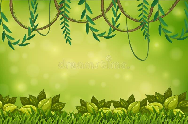 Una carta da parati verde della vite e della giungla illustrazione di stock