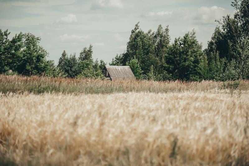 Una casa abbandonata sta tutti da solo in mezzo ad un giacimento di grano nella distanza fotografia stock libera da diritti